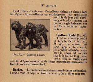Griffon_Boulets