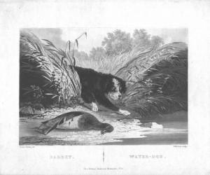 Newton Fielding 1799 1856